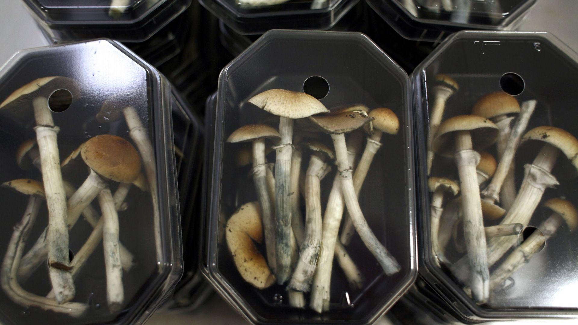 Por inyectarse hongos mágicos, un hombre terminó en el hospital con fallas en sus órganos