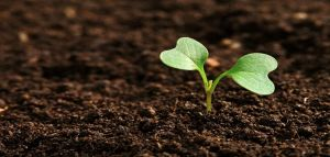What Type of Soil is best for Agriculture
