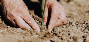 How to Take Care of Soil