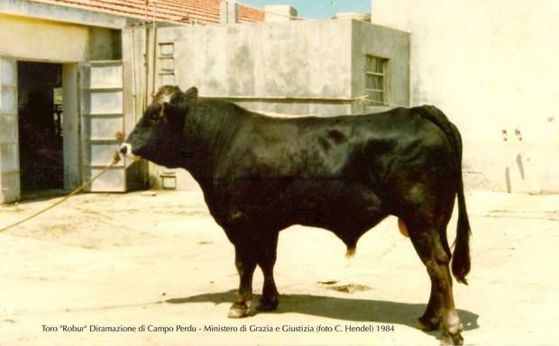 Robur C.Perdu (foto Hendel 1984)