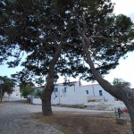 Asinara - Cala d'Oliva