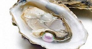 ostrica perlifera (ph. rep.)