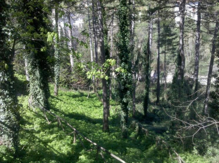 Panoramica del boschetto