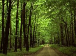 Foresta di Mercadante
