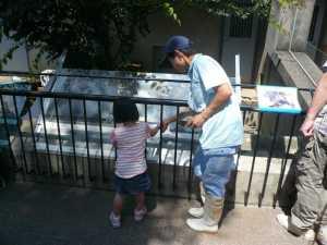 市川市動植物園のカワウソが来た!