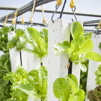Sustainable growth? New agricultural technologies and food security