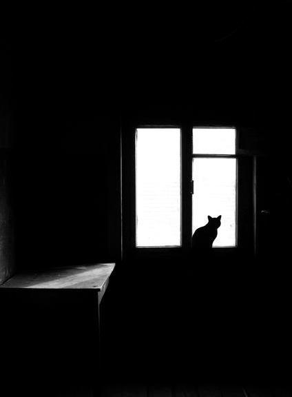 Кошки не ждут
