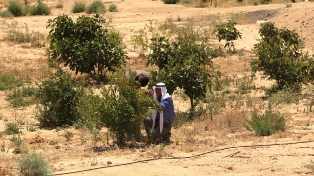 Project Wadi Attir's ecosystem restoration initiative is combatting desertification. Photo: courtesy