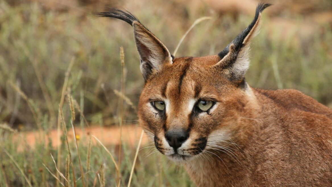 Check Out Israel S 10 Most Unusual Wild Animals Israel21c
