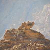 The Timna Sphinx