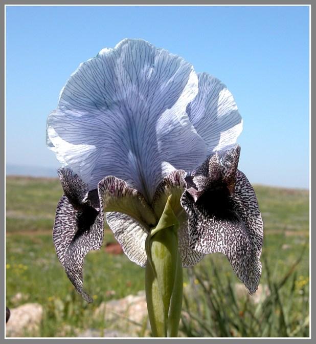 Flora of Israel