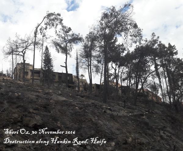 Haifa's fires - fire destruction along Hankin Road