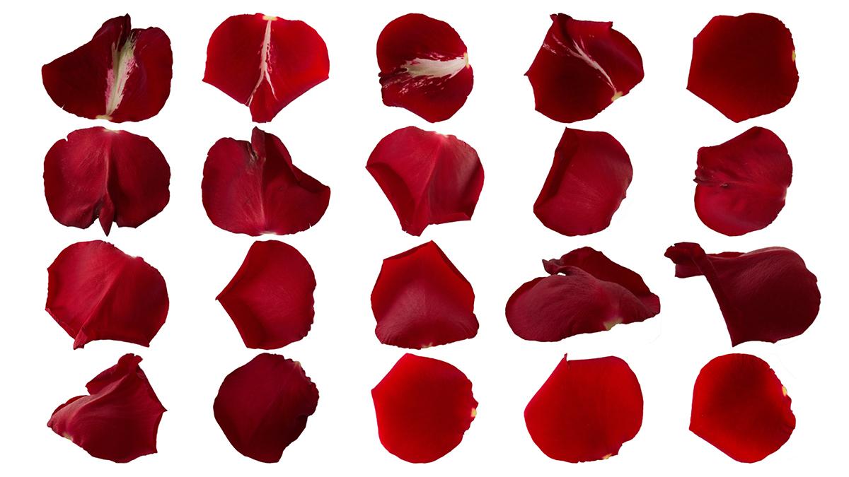 Superposición de Pétalos Rojos