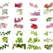 Flores y ramas