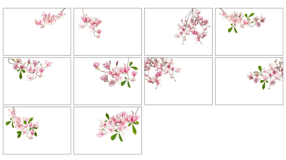 bajo las magnolias