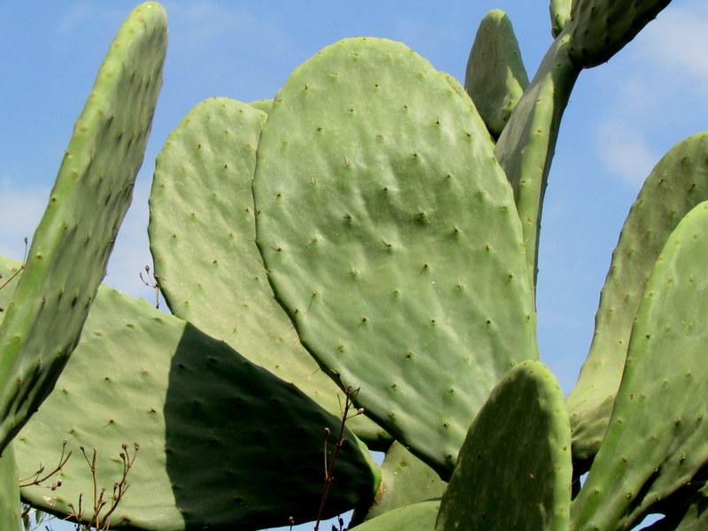 Cactus_IMG_2344