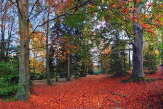 villa bernocchi premeno - istanti in viaggio - autunno - fotografare l'autunno -