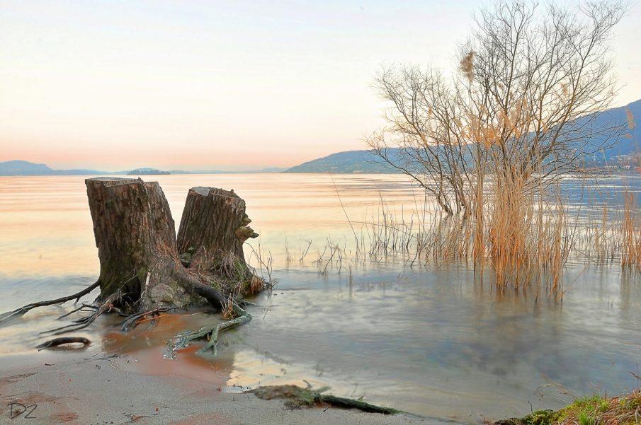 - Canneto di fondotoce - fondotoce - riserva naturale di fondotoce - istanti in viaggio - lago maggiore - verbania
