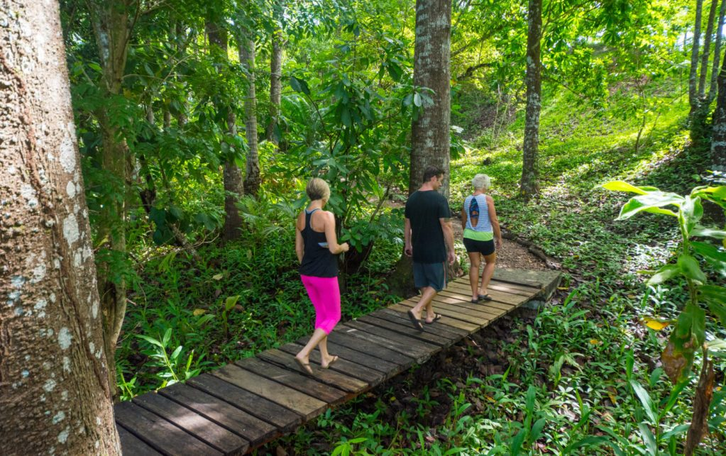 Walk on our retreat center nature trail and catch some tropical wildlife