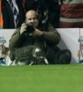 anfield-cat