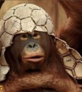monkey-soccer-helmet