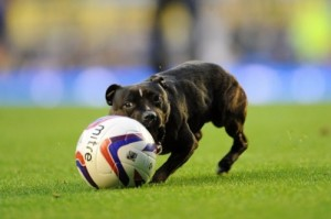 goodison dog