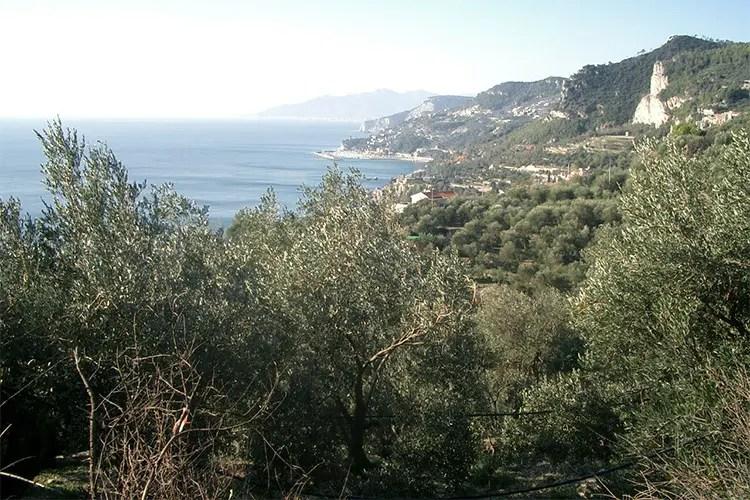 La Liguria dell'olio di eccellenza Profumi e sapori di un territorio unico