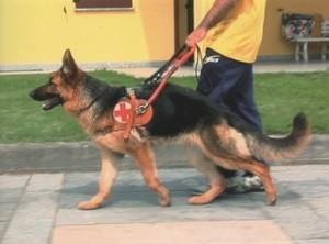 cane-guida-300x222