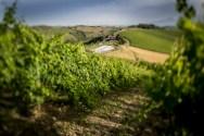 De agriturismo is omringd door wijngaarden