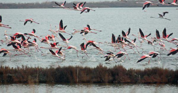 italiainpiega-pieghe-meraviglise-itinerari-moto-pianura-padana-delta del po-fenicotteri rosa