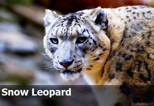 SnowLeopard 0011 Apple ha reso disponibile il nuovo Security Update 2010 006 per Snow Leopard