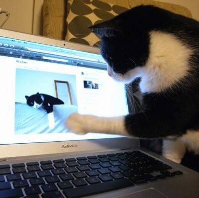 Gatti che usano il Mac