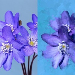 enlight painting before after 1500x1000 250x250 Enlight, una completa app di editing fotografico per iPhone