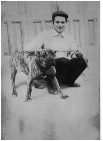 Brigante, famoso cane corso siciliano campione di lotta anni '70-'74.