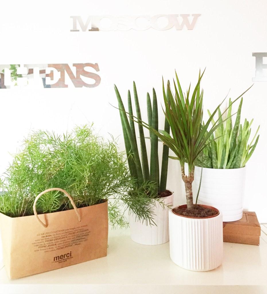 #plantshelfie #urbanjunglebloggers - ikea kardemumma pot