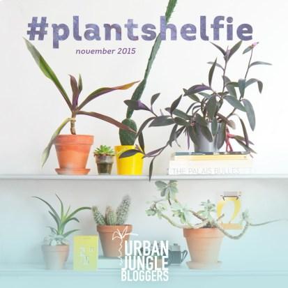 #plantshelfie #urbanjunglebloggers ITALIANBARK blog