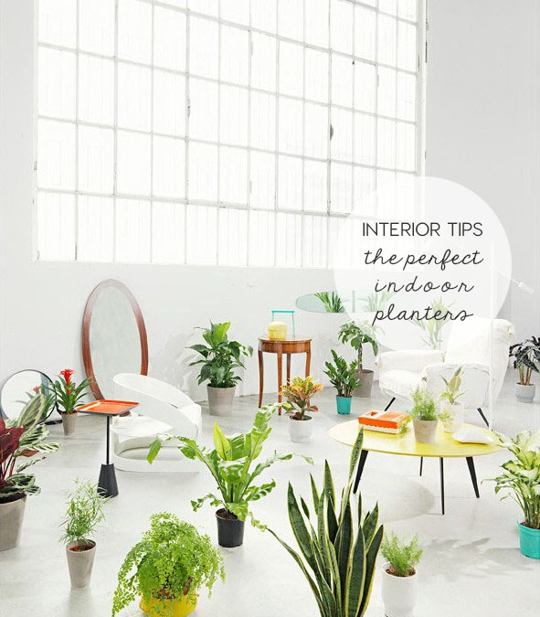 Choosing the perfect indoor planters | INTERIOR TIPS
