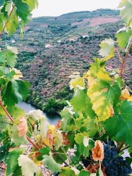 reasons visit portugal, valle douro, porto wine