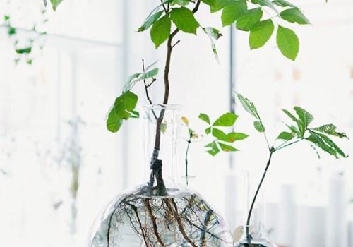 green-trend-rooting-plants-in-water-italianbark