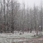 March Snow in Carolinas is Bella