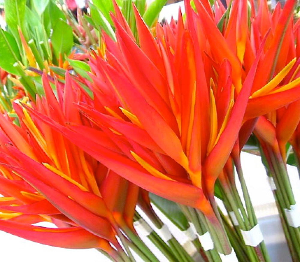 gorgeous tropical flowers available in the markets