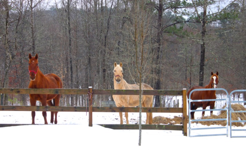 "the horses are saying, ""What Is This White Stuff?"""