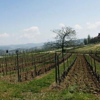 Charming wedding in the land of great wines: Castello di Barolo