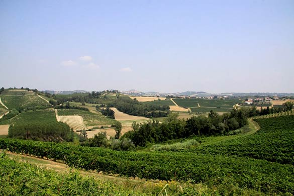 Monferrato-vineyards