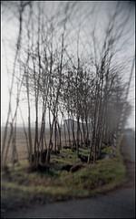 Scatto su pellicola Agfaphoto Vista