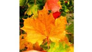gfoglia-foto-colore-www-cgiamestre-com-350x200