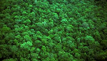 Primo portale completo per tracciare il supporto dello sviluppo delle capacità internazionali per il monitoraggio delle foreste