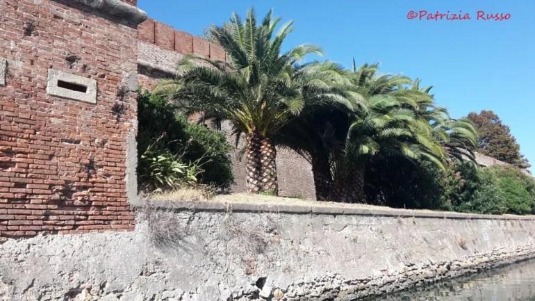 I fossi di Livorno, le palme della Fortezza nuova