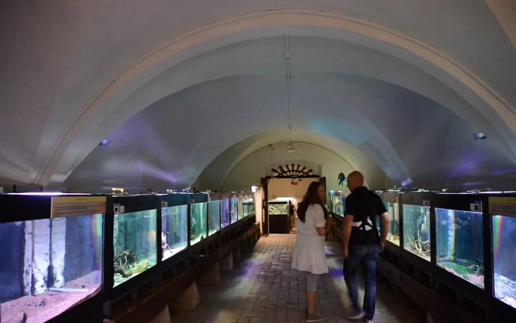 L'acquario di Calci (ph. P. Russo)