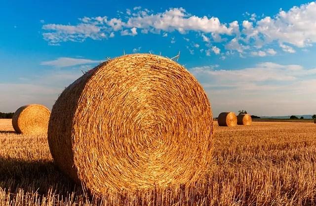 Agricoltura, prorogato al 15 novembre il bando della Regione Toscana per il Sostegno ad attività dimostrative e azioni di informazione.